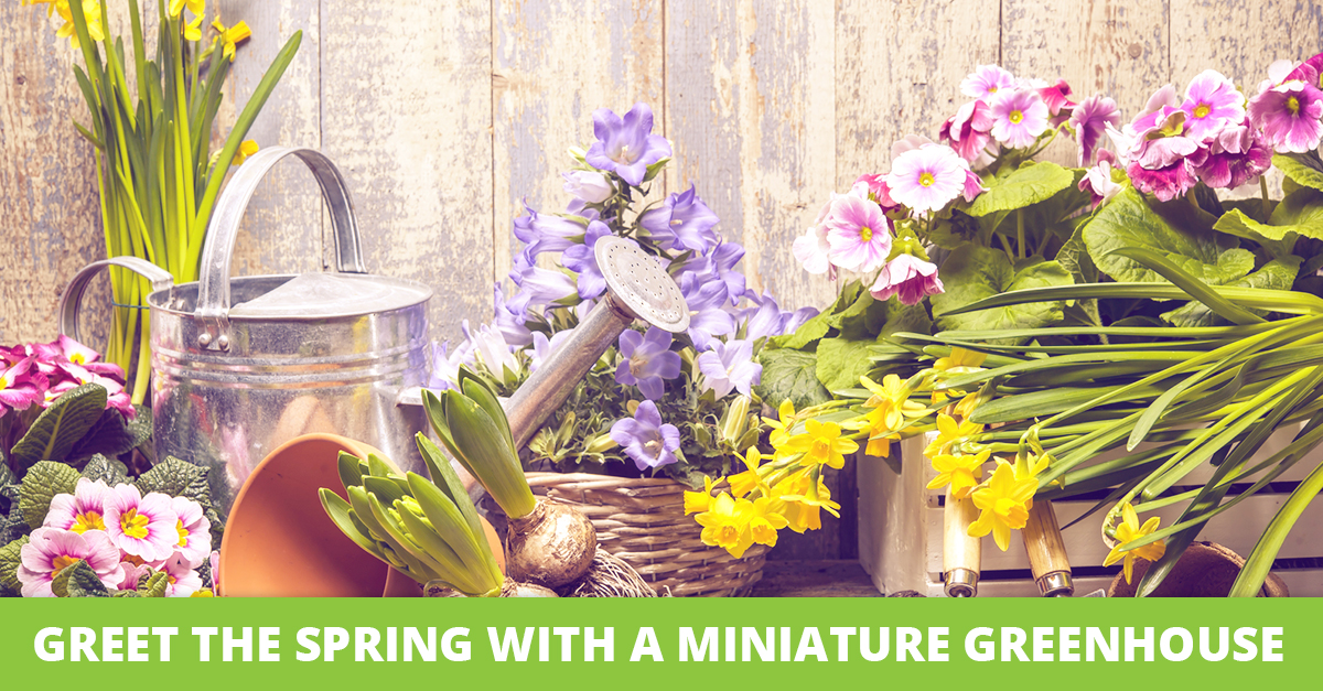 Greet the Spring with a Miniature Greenhouse
