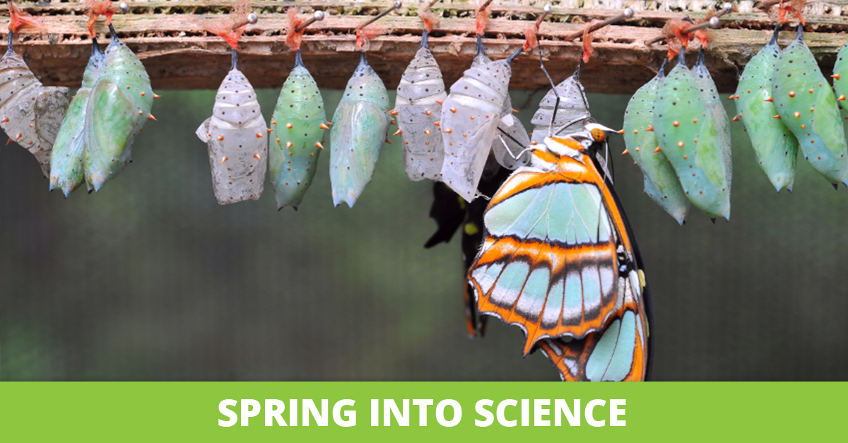 Spring into Science